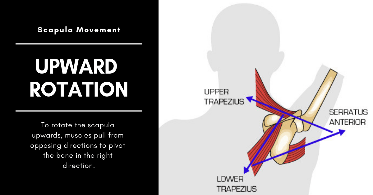 scapula upward rotation